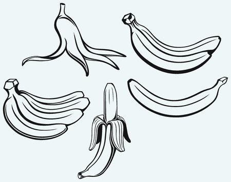 linework: Bunch of bananas, peeled banana and banana peel isolated on blue background Illustration