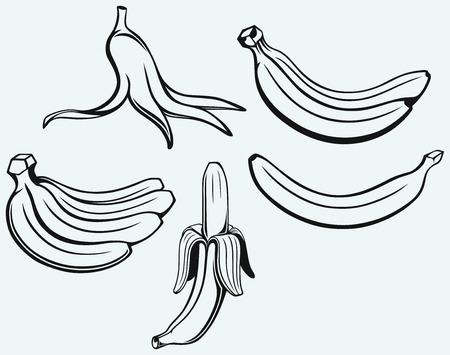 platano maduro: Manojo de pl�tanos, pl�tano pelado y piel de pl�tano aislados sobre fondo azul Vectores