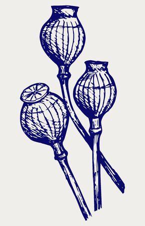 opium poppy: Opium poppyhead. Doodle style