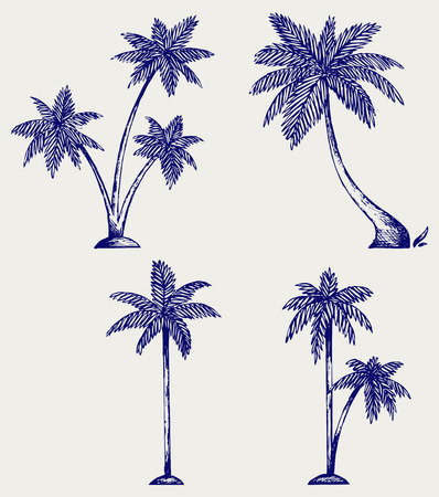 tree leaf: Silhouette of palm trees. Doodle style