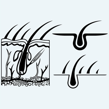 Estructura Del Cabello Ilustración Vectorial De Educación Médica ...
