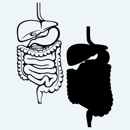excretion: Internal human digestive system. Isolated on blue background