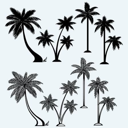 tree leaf: Silhouette of palm trees. Isolated on blue background
