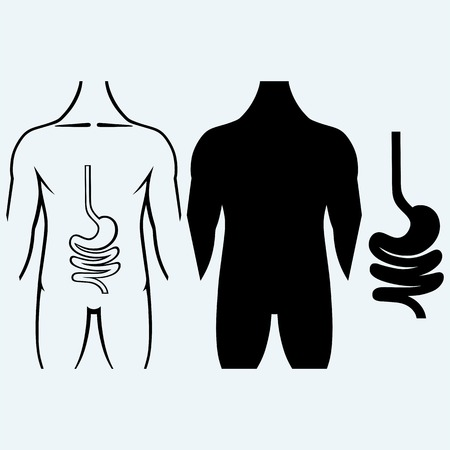 digestive: Human digestive system. Isolated on blue background