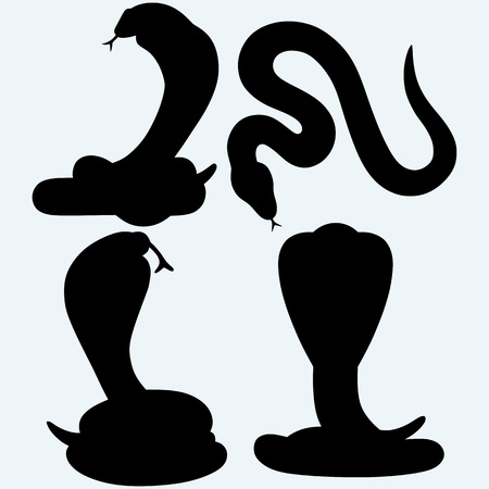 herpetology: Poisonous snakes. Isolated on blue background. Vector silhouettes