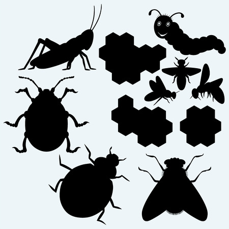 art: Species of insects: grasshopper, gaterpillar, working bee on honeycells, ladybug, flies and beetle. Isolated on blue background. Vector silhouettes