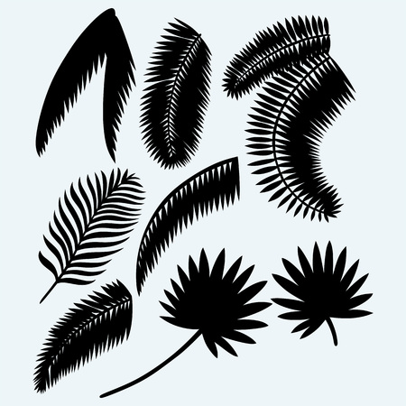 Collection set of palm leaves. Isolated on blue background. Vector silhouettes