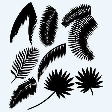 aislado: Conjunto de la colección de hojas de palma. Aislado en el fondo azul. siluetas del vector