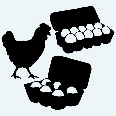 egg: Eggs in a carton package and chicken. Isolated on blue background.