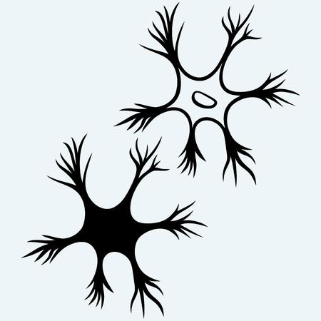 neuron: icono de la neurona. Aislado en el fondo azul. siluetas del vector Vectores