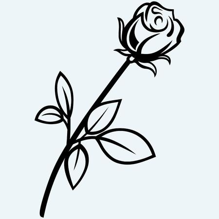 black and white plant: rose flower Illustration
