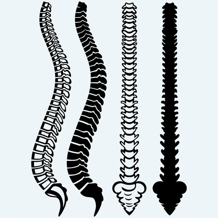 Spine from the front, profile. Isolated on blue background. Vector silhouettes