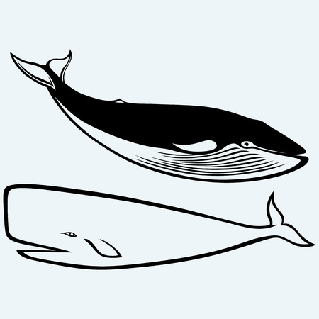 baleen whale: Humpback whale. Isolated on blue background. Vector silhouettes Illustration