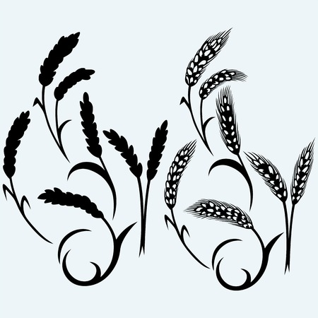 rye: Wheat and rye. Isolated on blue background. Vector silhouettes