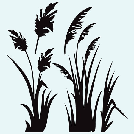 rushy: Silhouette reed isolated on white background Illustration