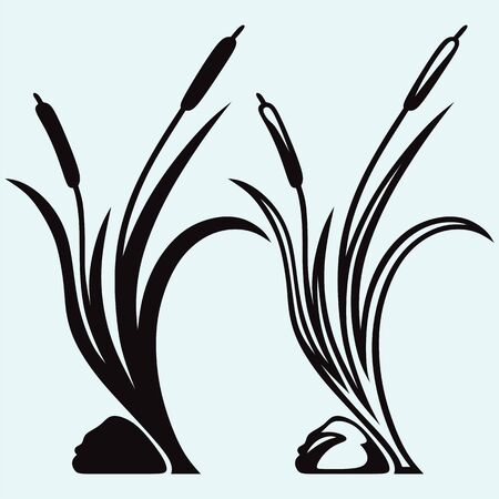 wilderness area: Silhouette reed isolated on white background Illustration