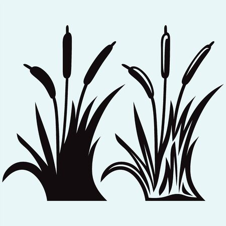 verdure: Silhouette reed isolated on white background Illustration
