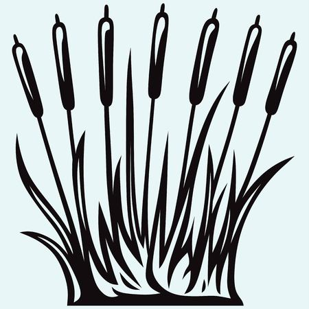 cattail: Silhouette reed isolated on white background Illustration