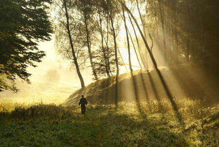 Walk along the forest in the early misty morning Stock Photo - 9350729