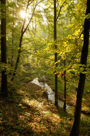 Stream in the autumn woods Stock Photo - 9584613