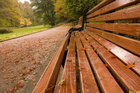 Bench in the park in autumn season photo