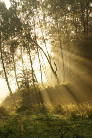 Mystic foggy landscape in the morning Stock Photo - 10900655