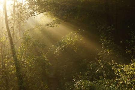 Strong sun rays through tall Stock Photo - 10900647
