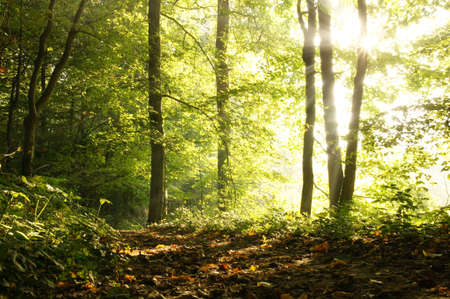 Misty autumn forest Stock Photo - 10900654