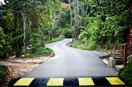 Road in green malaysia rainforest. Ecotourism. photo