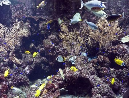 Group of coral fish  blue water. Stock Photo - 4878683