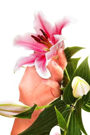 Woman hands with manicure and flower. Isolated. Imagens