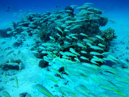 Group of coral fish  in blue water. photo