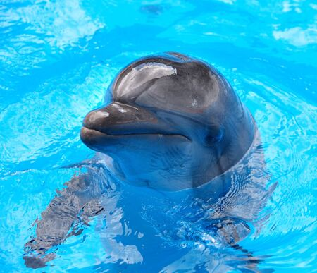 Happy dolphin in blue water. photo