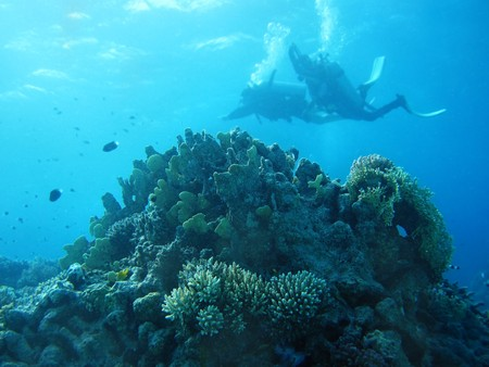 Group of coral fish in  blue water.Scuba diver. Stock Photo - 7888291