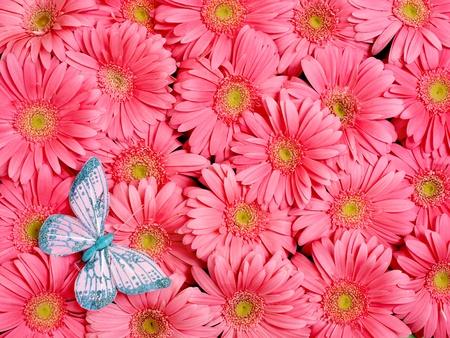 Background of gerbera flower. photo