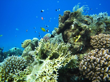 Group of coral fish  in blue water. Stock Photo - 9779390