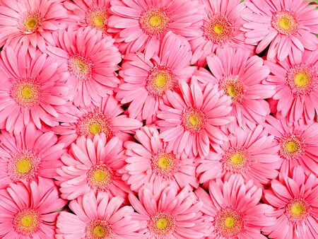 Background of gerbera flower. Stock Photo - 9831474