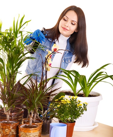 houseplant: Woman  looking after houseplant at home.