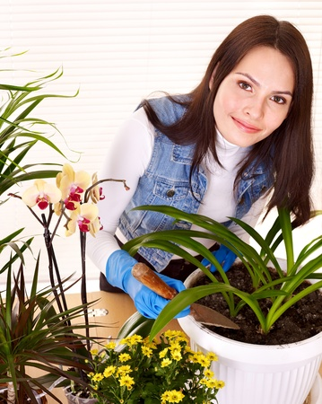 houseplants: Woman  looking after houseplant at home.