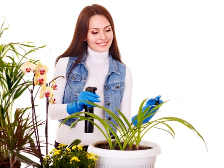 looking after: Woman  looking after houseplant at home.