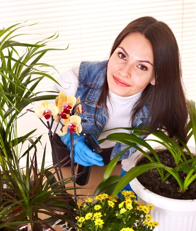Woman  looking after houseplant at home. photo