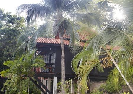 ecotourism: Health resort in green rainforest. Ecotourism.