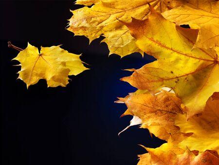 Orange autumn leaves on black background. photo
