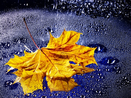 Yellow autumn leaf floating on water with rain. photo