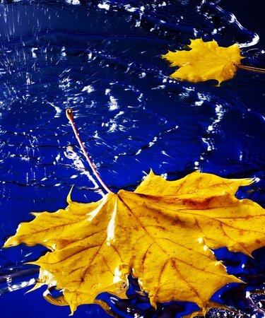 Yellow autumn leaf floating on water with rain. Stock Photo - 11174902