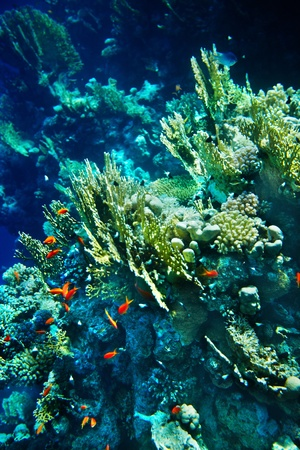 Group of coral fish  blue water. photo