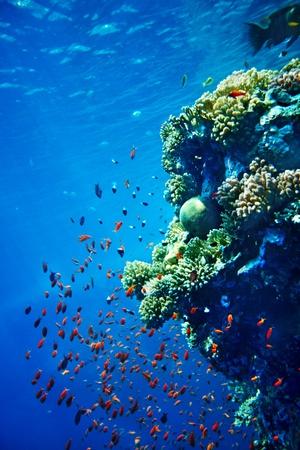 青い水の中のサンゴ礁の魚たちのグループです。ダイビング。