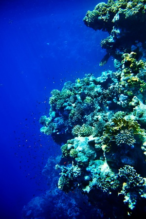 Group of coral in blue water. photo