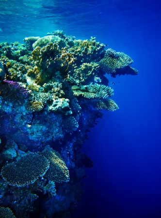 Underwater life of coral reef. Beautiful of nature. photo