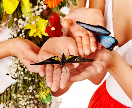 morpho menelaus: Butterfly on hand. Isolated. Stock Photo